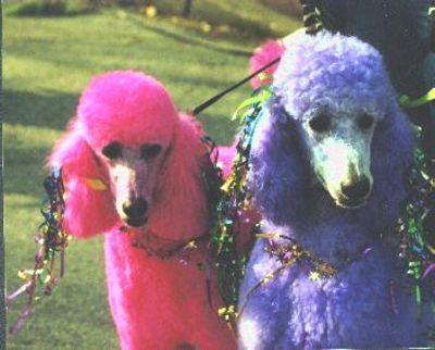 tn_pissy-poodles.jpg