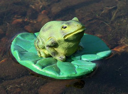 [http://minimediaguy.org/wp-content/uploads/2008/05/tn_frog-on-lily-pad.jpg]